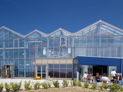 Westlandsedruif 1 glasshouse