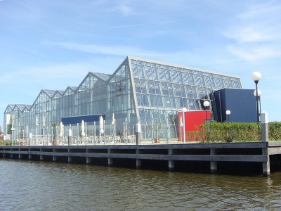 Westlandsedruif2 glasshouse