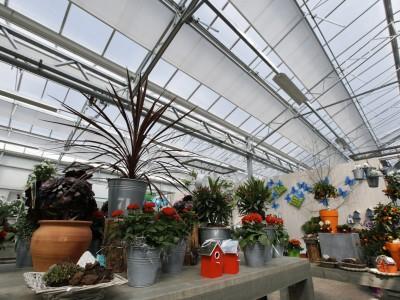 Almeerplant 4
