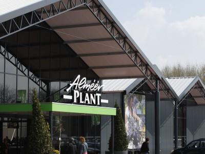 Almeerplant 6