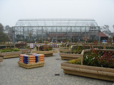 garden centre petal plants 3