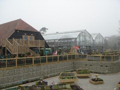 garden centre petal plants 4
