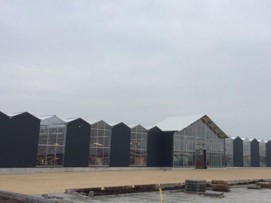 Wide span Billig Blomst development