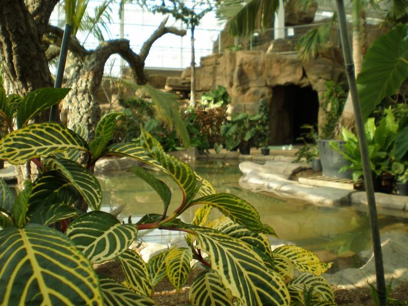 Wisley botanical garden glasshouse